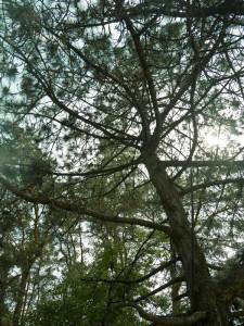Зеленый туризм и Черный лес.